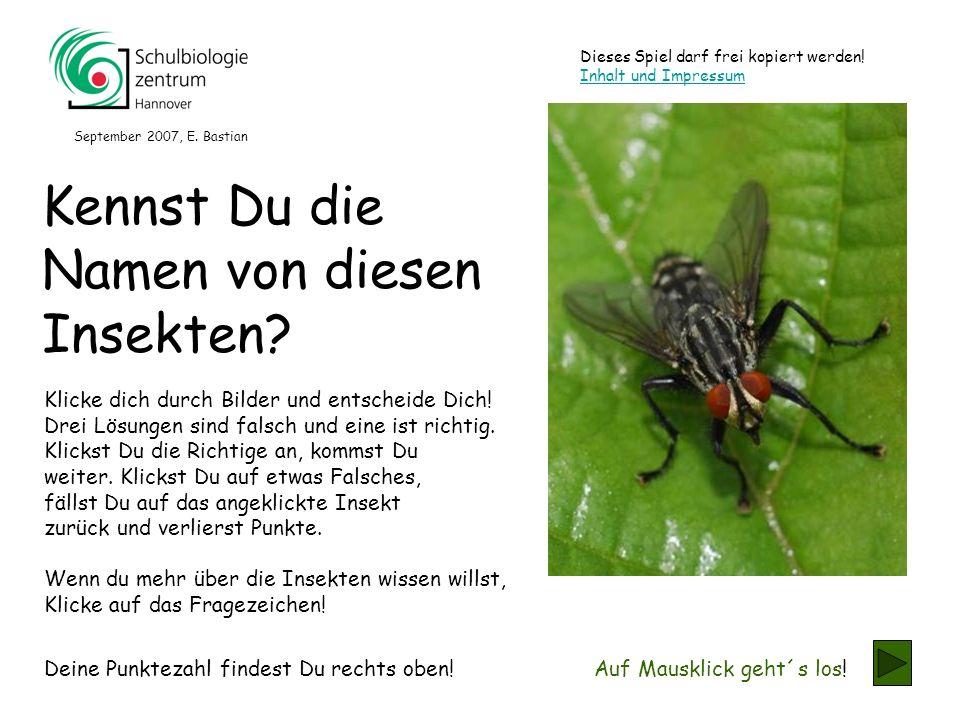 Kennst Du die Namen von diesen Insekten