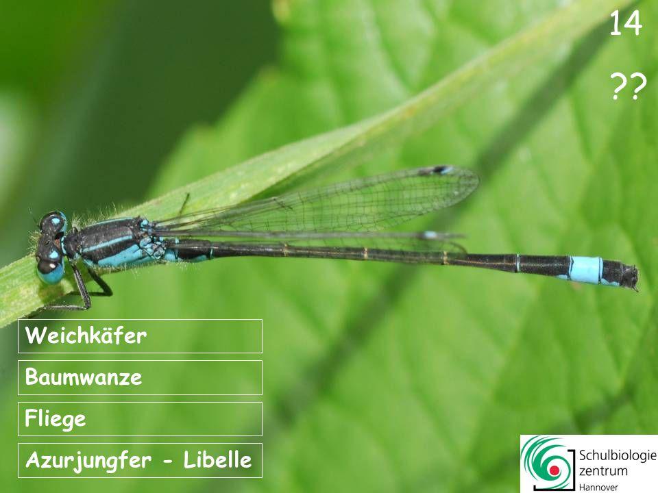 14 Weichkäfer Baumwanze Fliege Azurjungfer - Libelle
