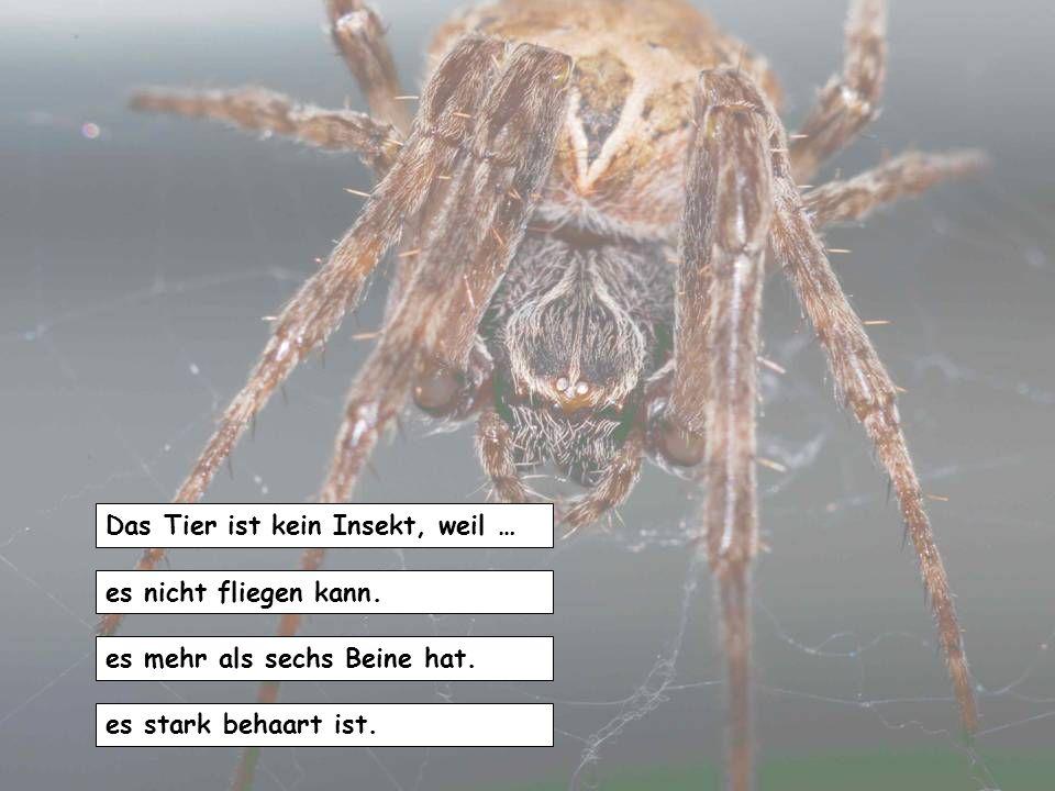Das Tier ist kein Insekt, weil …
