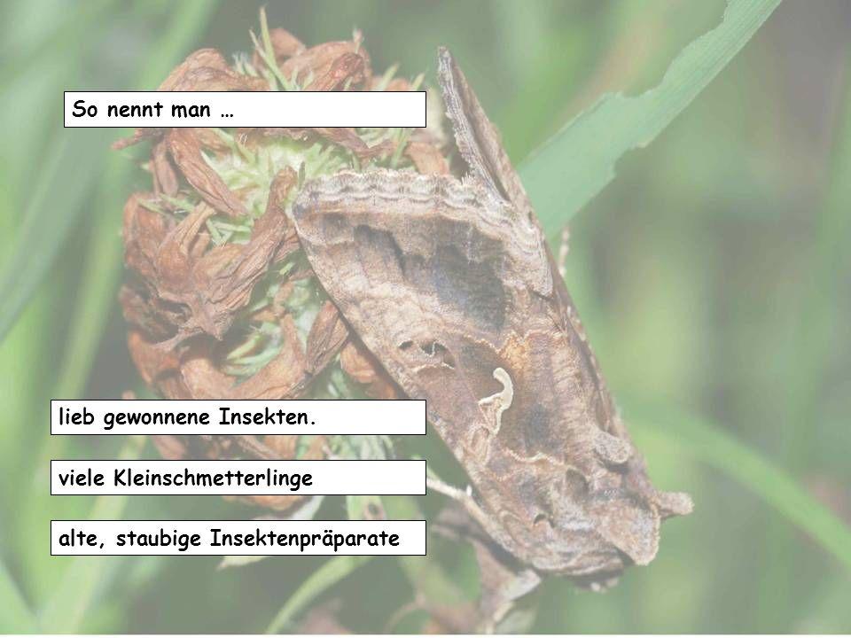 So nennt man … lieb gewonnene Insekten. viele Kleinschmetterlinge alte, staubige Insektenpräparate