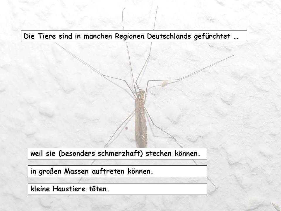 Die Tiere sind in manchen Regionen Deutschlands gefürchtet …