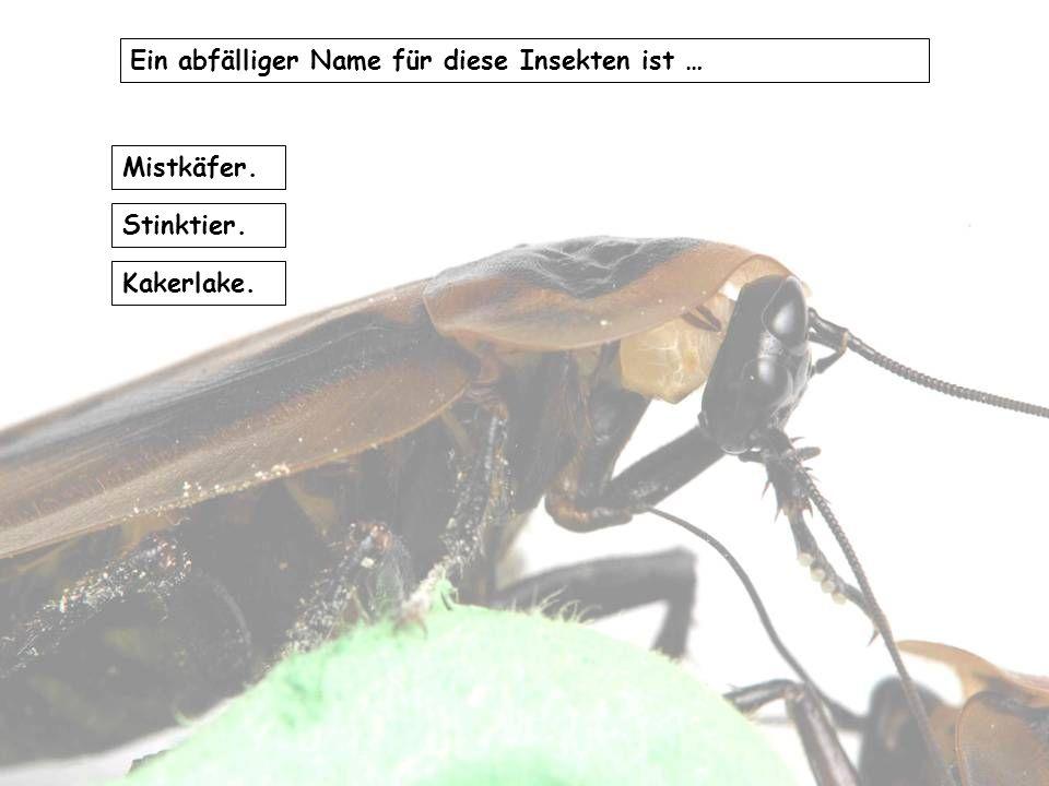 Ein abfälliger Name für diese Insekten ist …