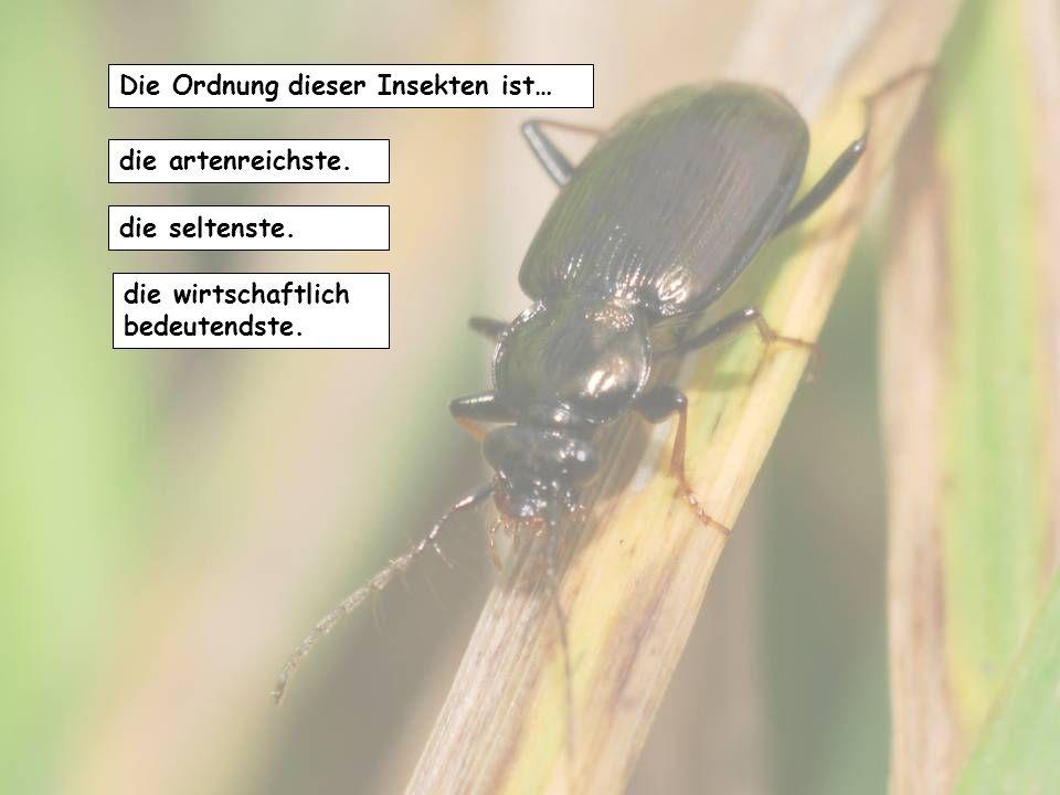 Die Ordnung dieser Insekten ist…