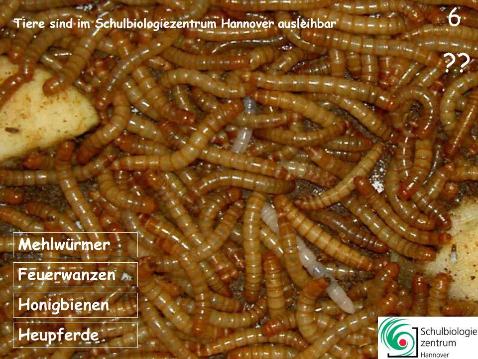 Tiere sind im Schulbiologiezentrum Hannover ausleihbar