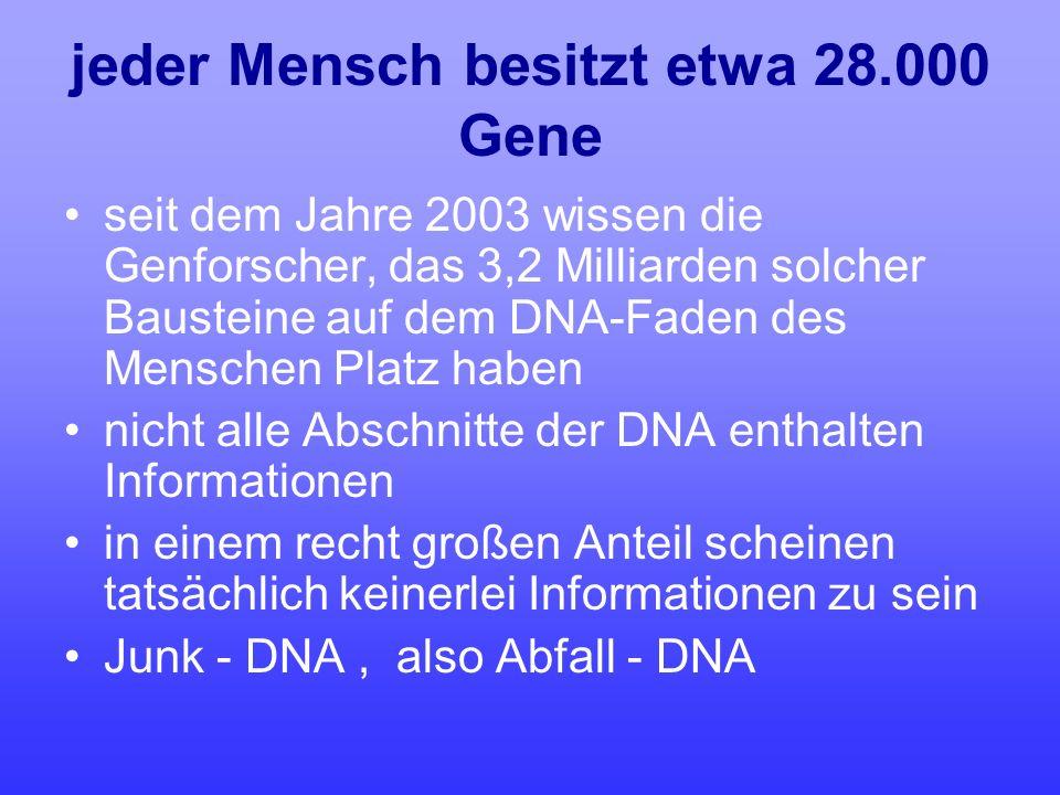 jeder Mensch besitzt etwa 28.000 Gene