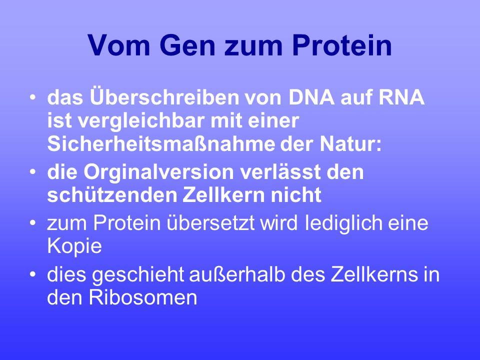 Vom Gen zum Protein das Überschreiben von DNA auf RNA ist vergleichbar mit einer Sicherheitsmaßnahme der Natur: