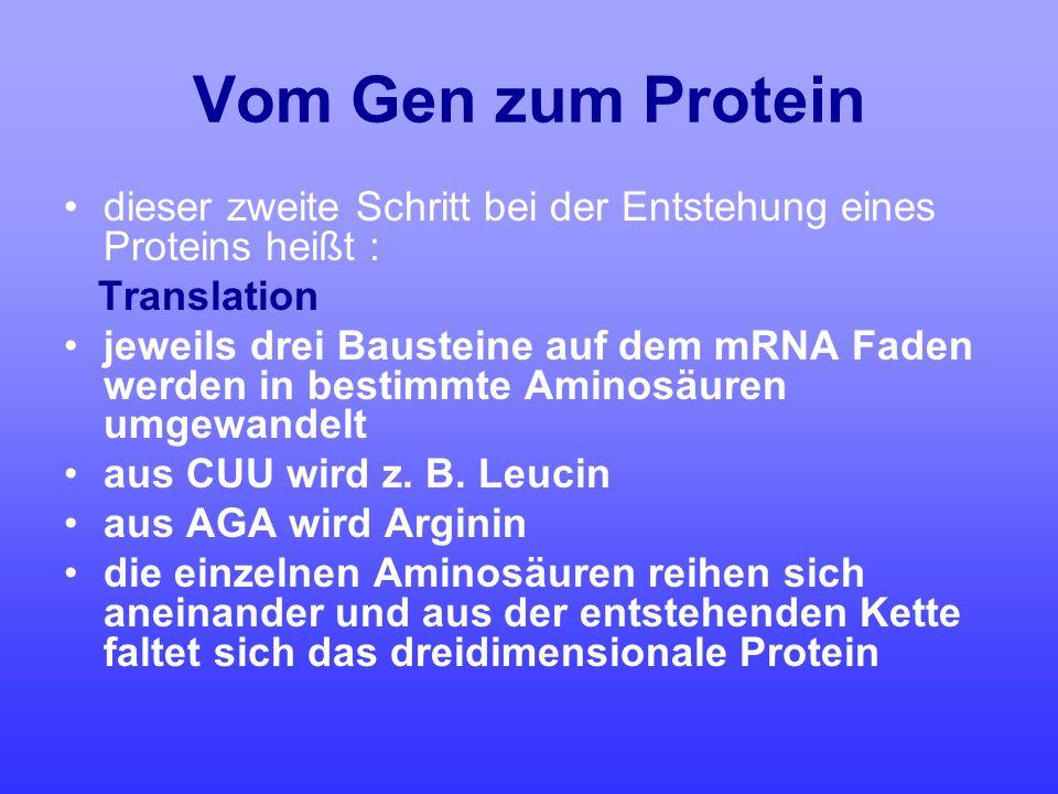 Vom Gen zum Protein dieser zweite Schritt bei der Entstehung eines Proteins heißt : Translation.