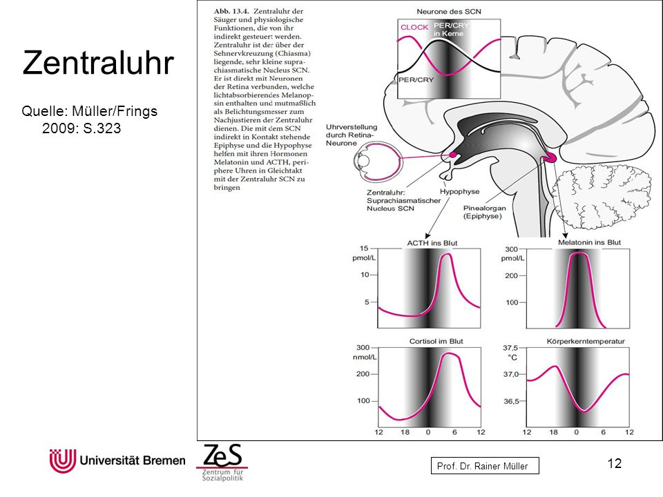 Zentraluhr Quelle: Müller/Frings 2009: S.323