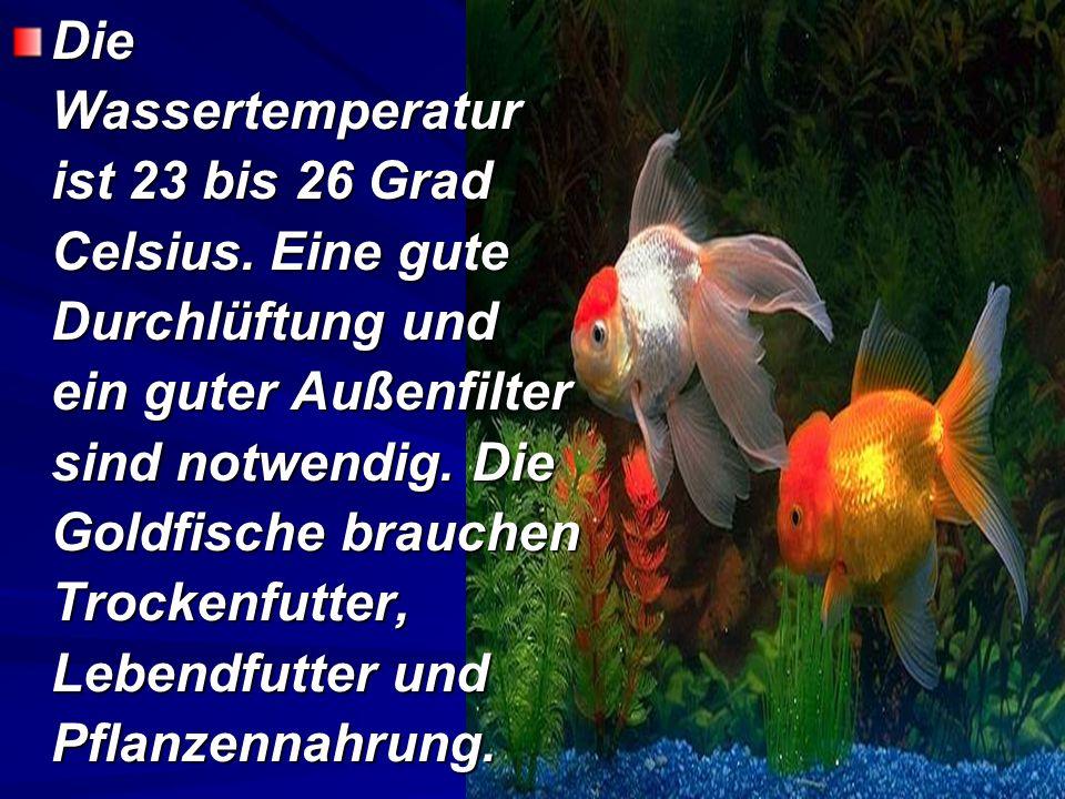 Die Wassertemperatur ist 23 bis 26 Grad Celsius