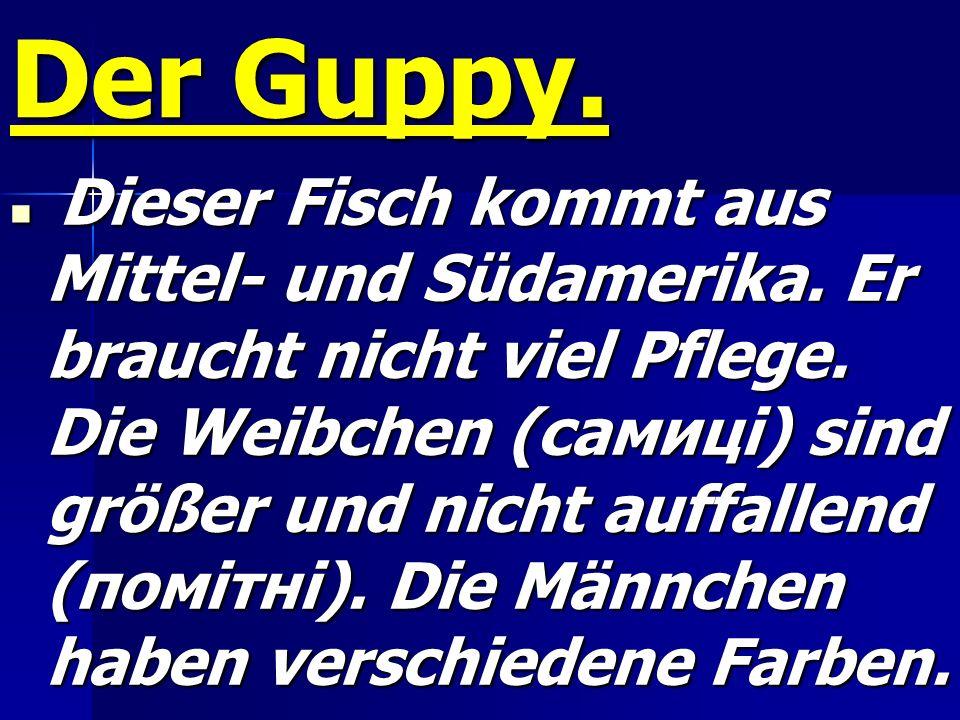 Der Guppy.