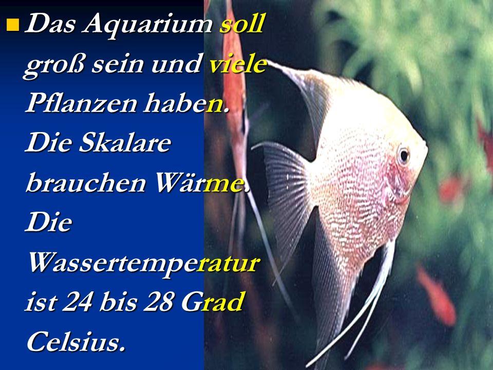 Das Aquarium soll groß sein und viele Pflanzen haben