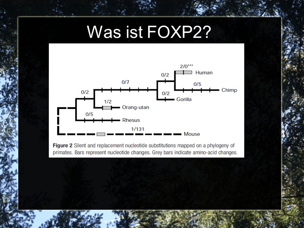Was ist FOXP2