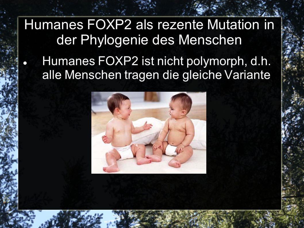 Humanes FOXP2 als rezente Mutation in der Phylogenie des Menschen