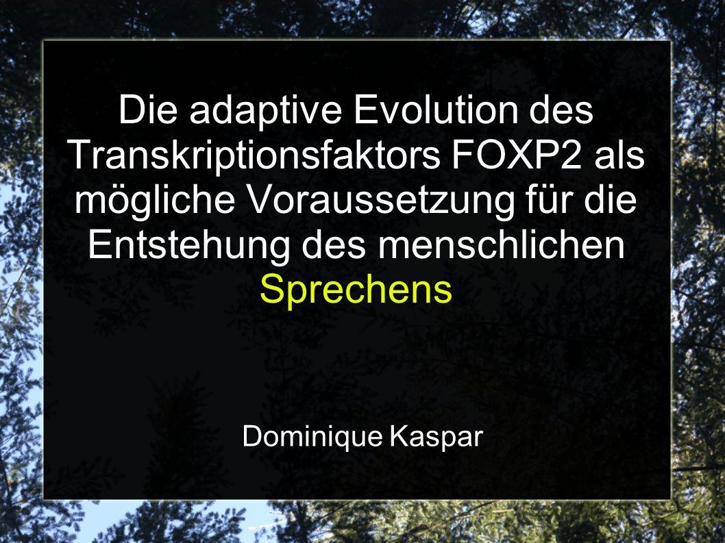 Die adaptive Evolution des Transkriptionsfaktors FOXP2 als mögliche Voraussetzung für die Entstehung des menschlichen Sprechens