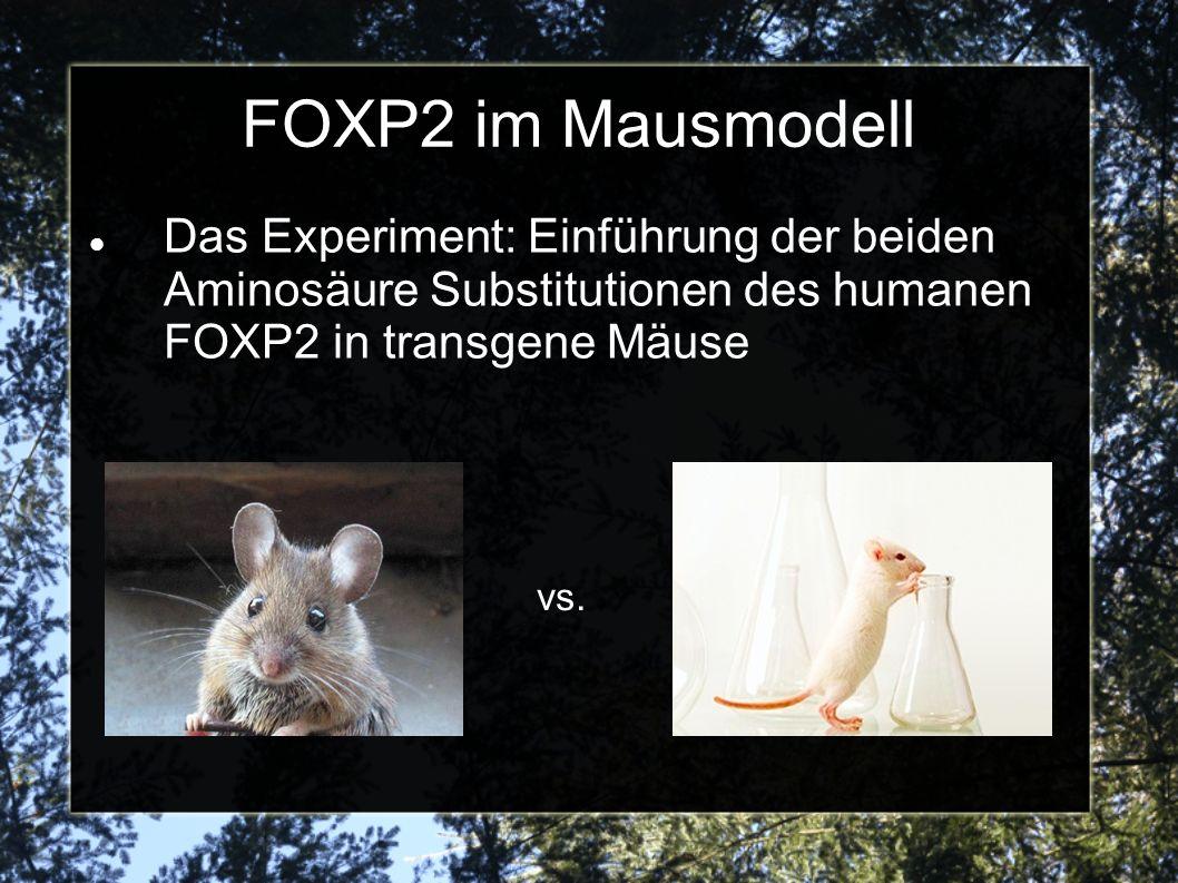 FOXP2 im Mausmodell Das Experiment: Einführung der beiden Aminosäure Substitutionen des humanen FOXP2 in transgene Mäuse.
