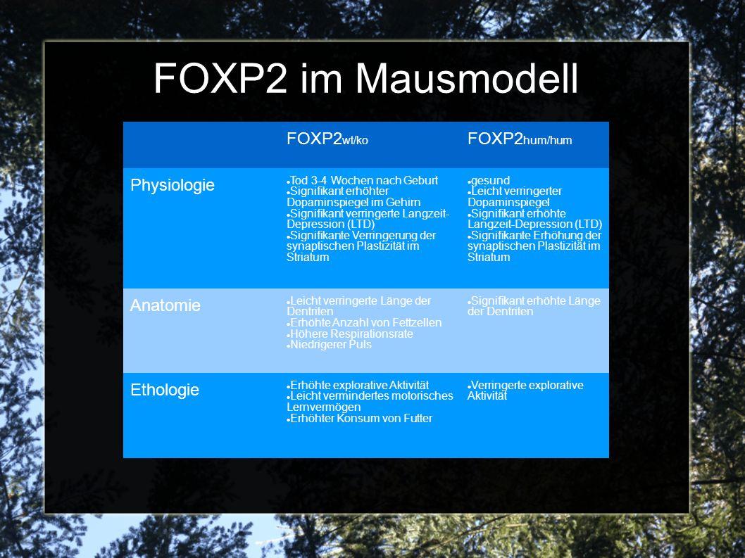 FOXP2 im Mausmodell FOXP2wt/ko FOXP2hum/hum Physiologie Anatomie