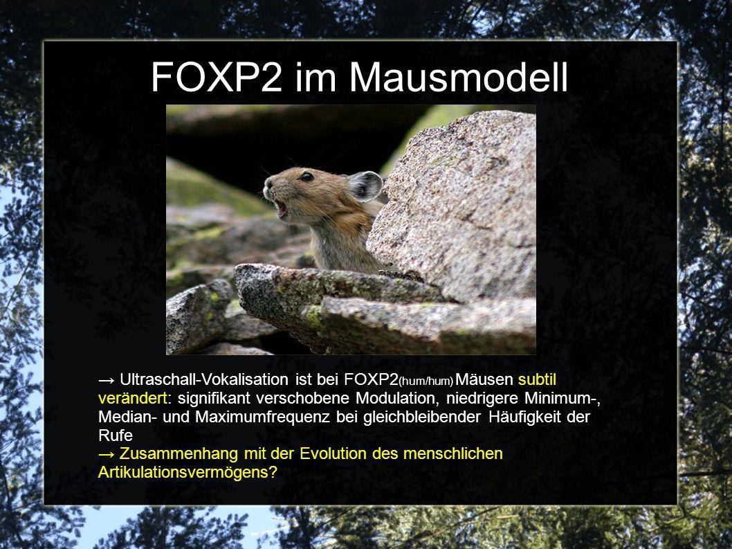 FOXP2 im Mausmodell