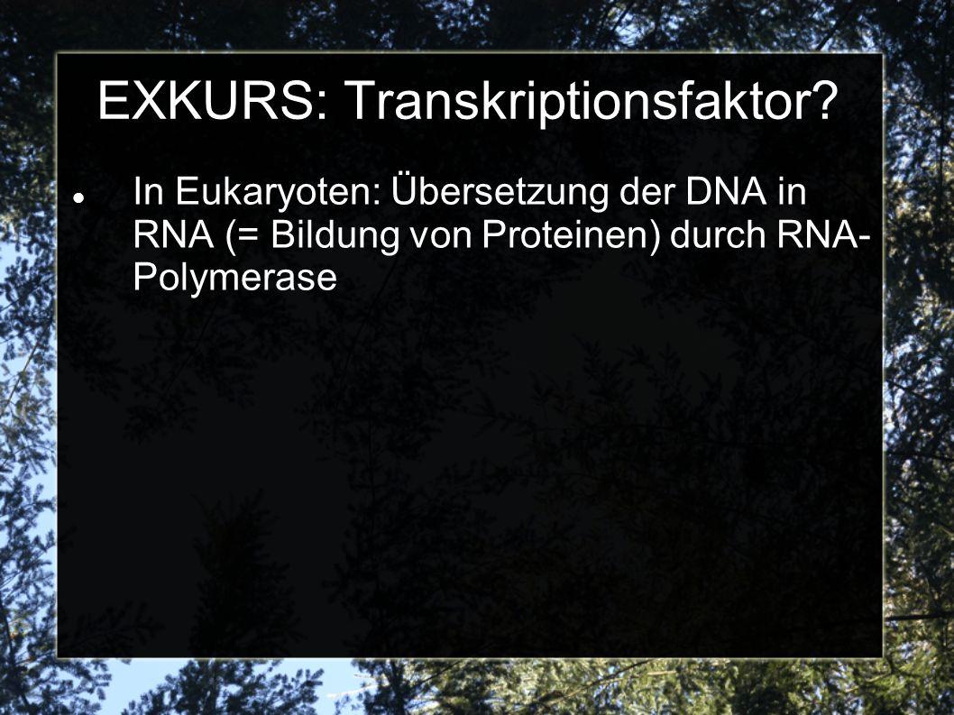 EXKURS: Transkriptionsfaktor