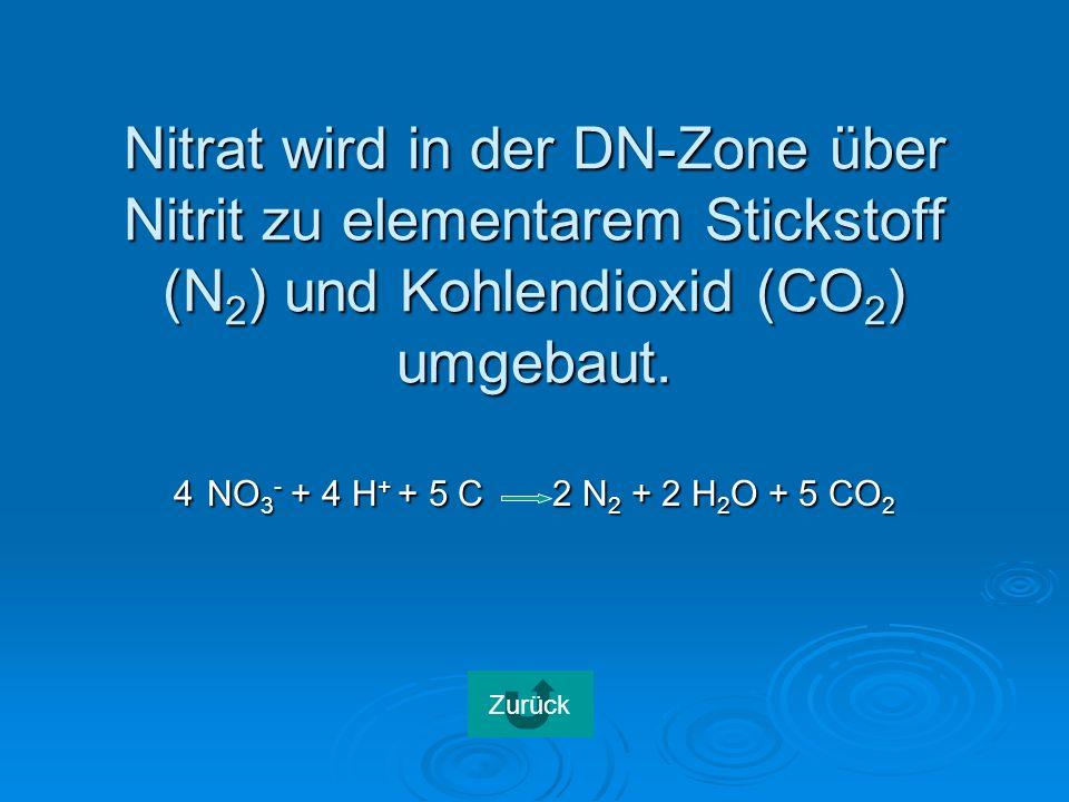 Nitrat wird in der DN-Zone über Nitrit zu elementarem Stickstoff (N2) und Kohlendioxid (CO2) umgebaut.