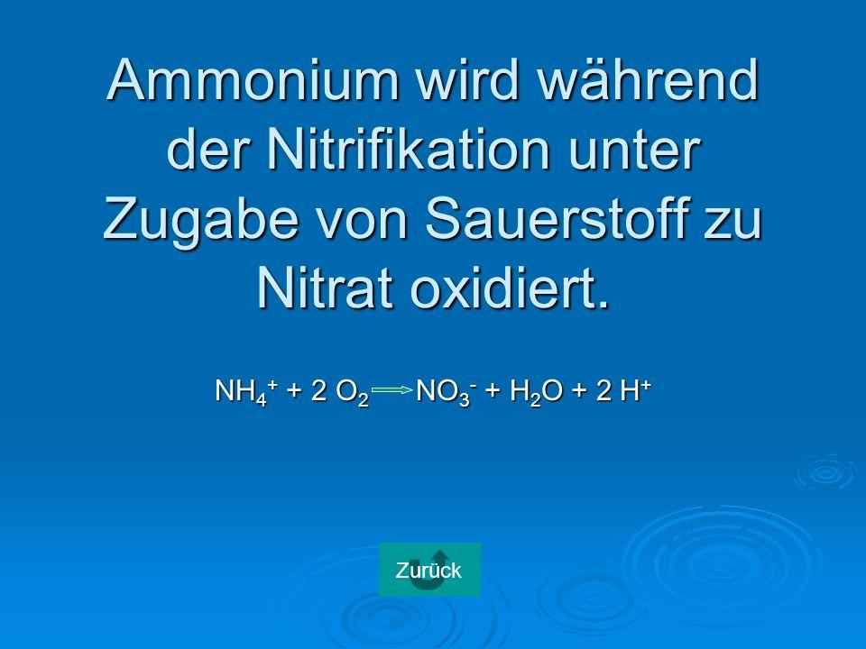 Ammonium wird während der Nitrifikation unter Zugabe von Sauerstoff zu Nitrat oxidiert.