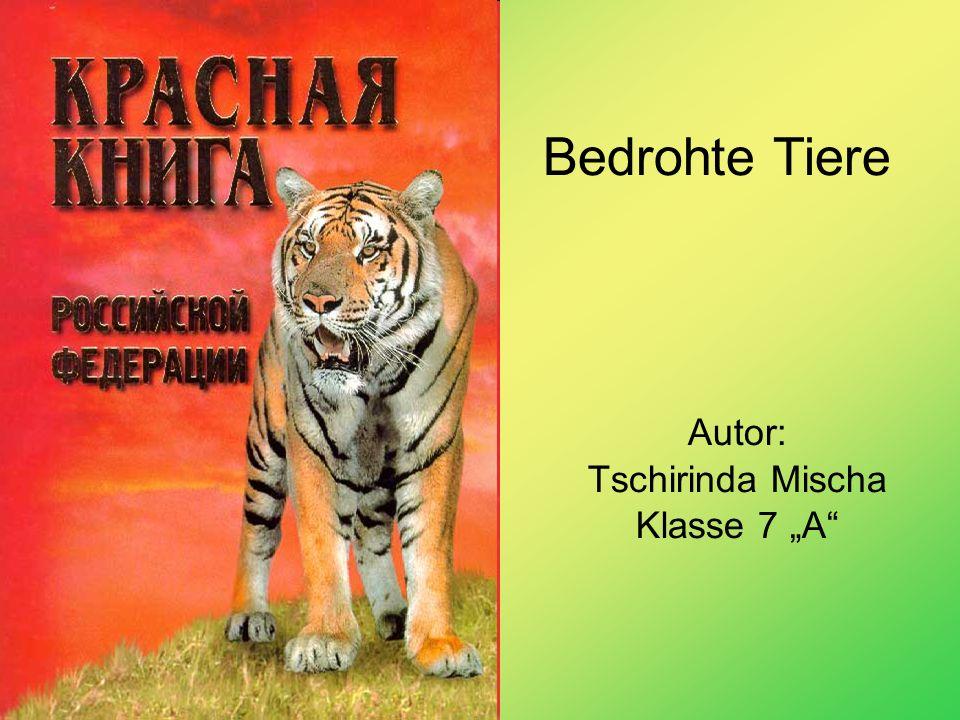 """Autor: Tschirinda Mischa Klasse 7 """"A"""