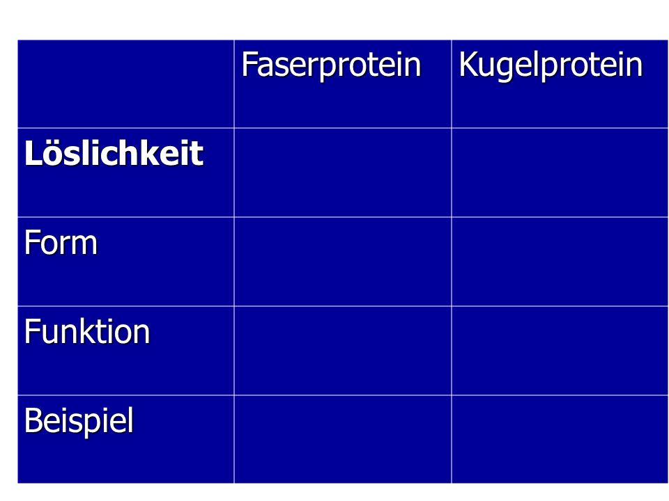 Faserprotein Kugelprotein Löslichkeit Form Funktion Beispiel