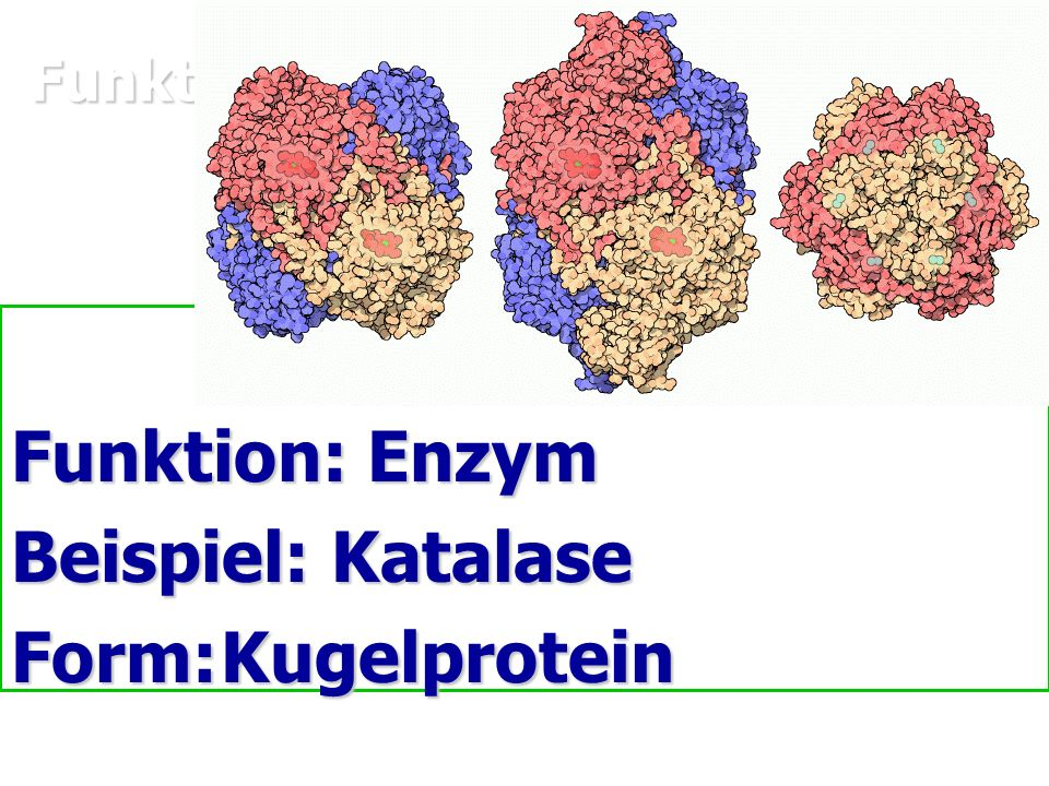 Funktionen von Proteinen und ein Beispiel