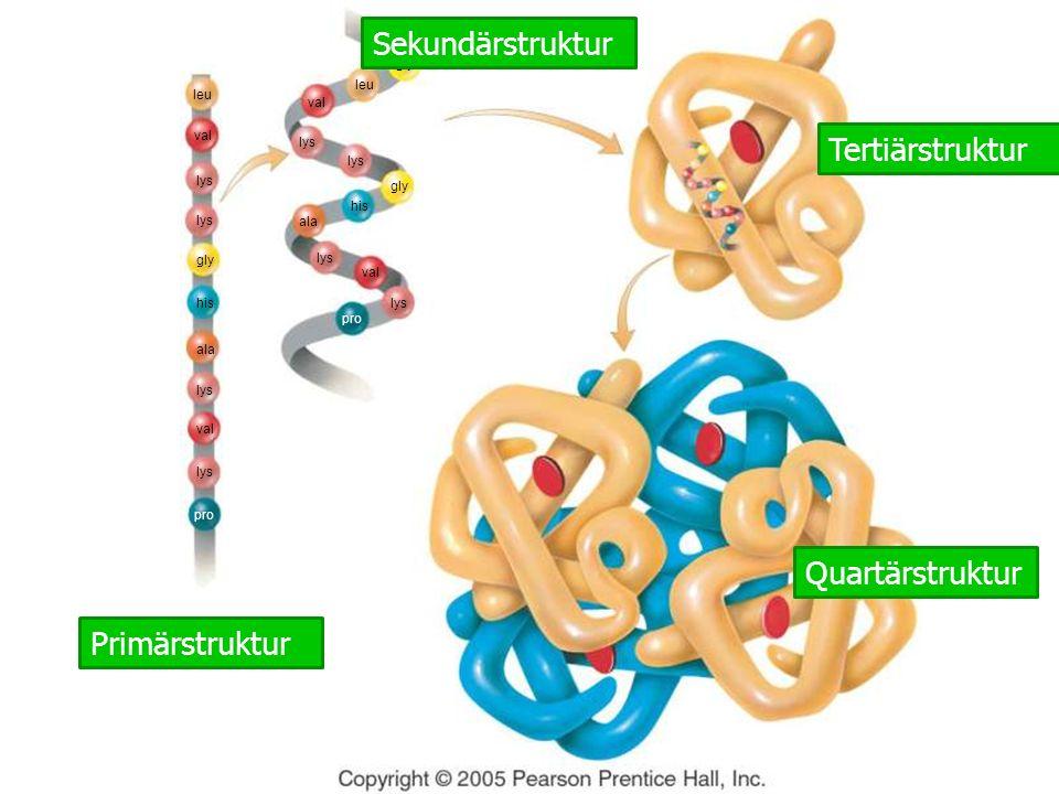 Sekundärstruktur Tertiärstruktur Quartärstruktur Primärstruktur