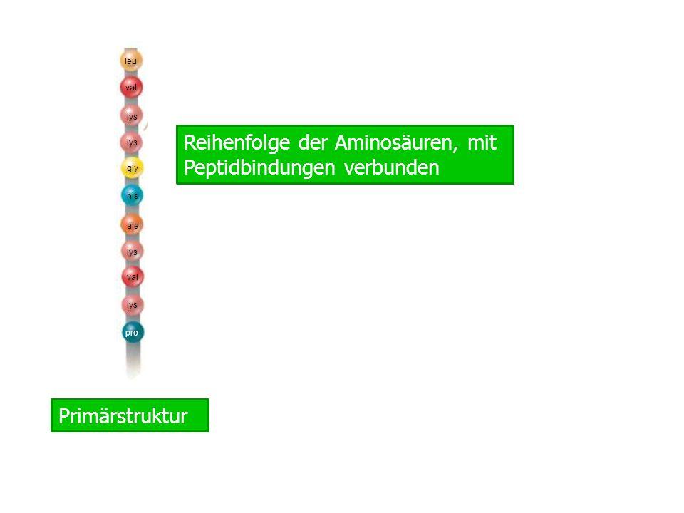 Reihenfolge der Aminosäuren, mit Peptidbindungen verbunden
