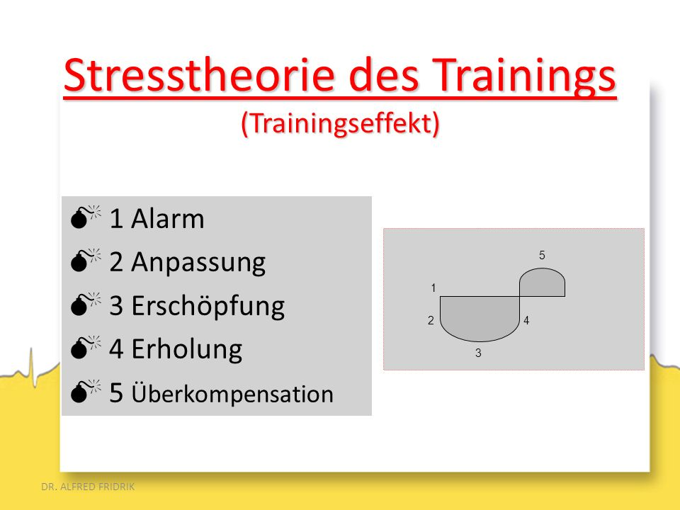 Stresstheorie des Trainings (Trainingseffekt)