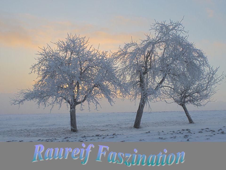 Raureif Faszination
