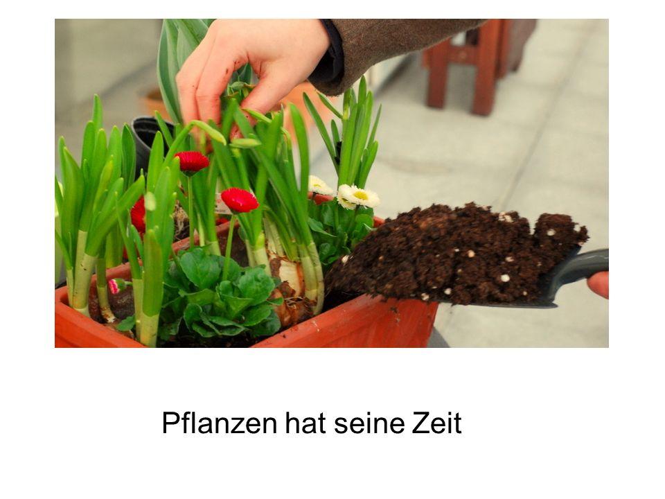Pflanzen hat seine Zeit