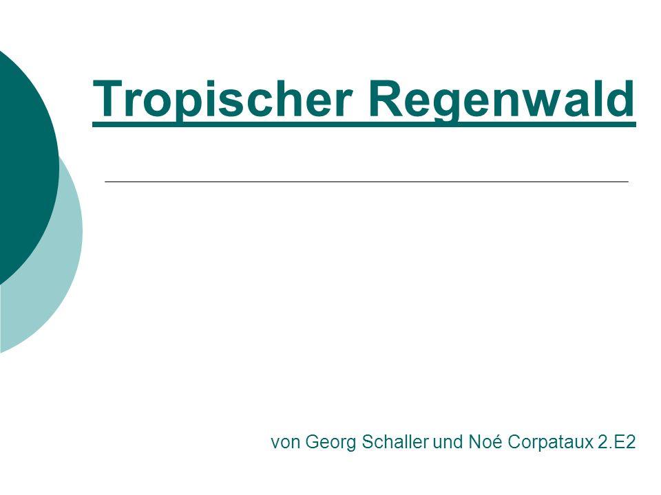 Tropischer Regenwald von Georg Schaller und Noé Corpataux 2.E2