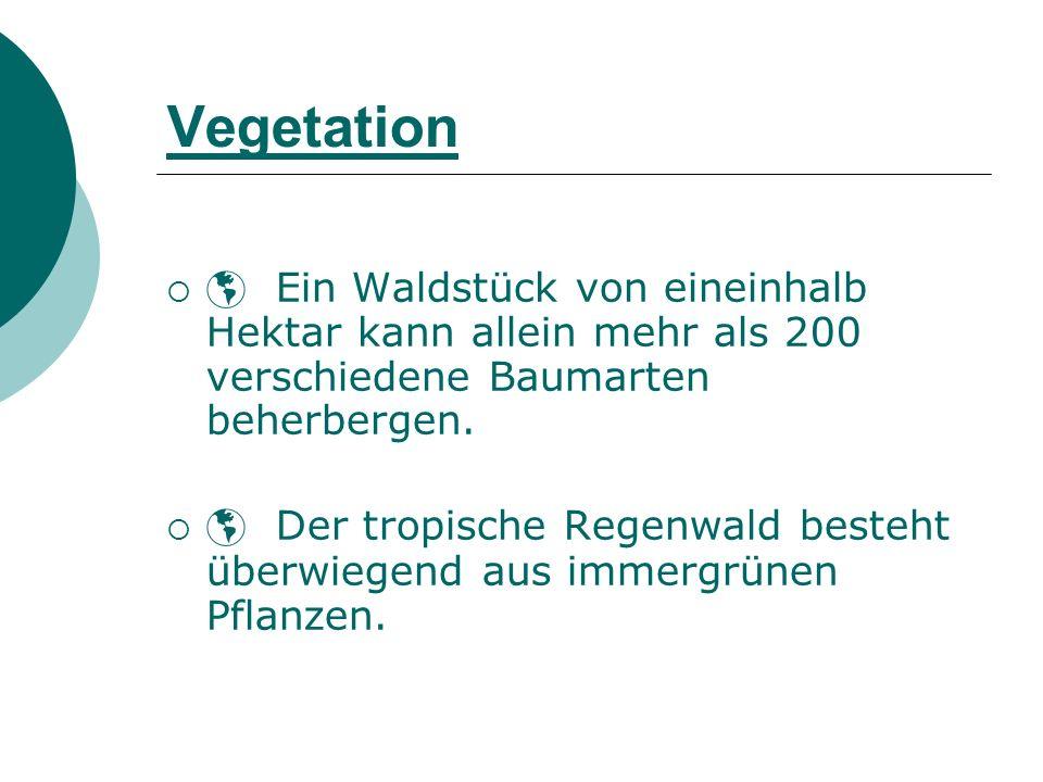 Vegetation  Ein Waldstück von eineinhalb Hektar kann allein mehr als 200 verschiedene Baumarten beherbergen.