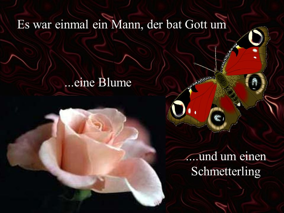 ....und um einen Schmetterling
