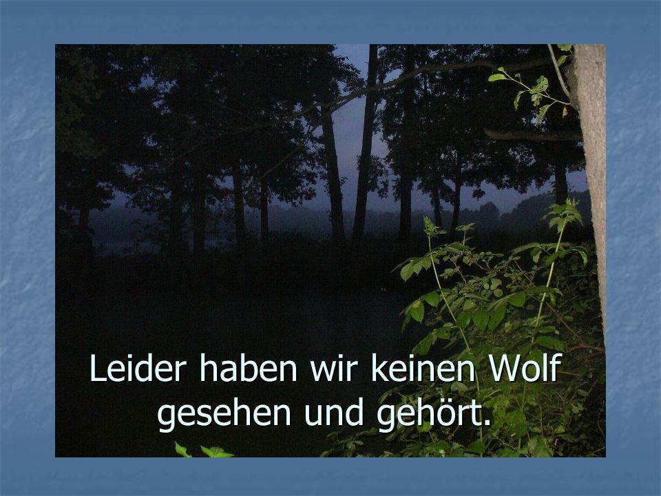 Leider haben wir keinen Wolf gesehen und gehört.