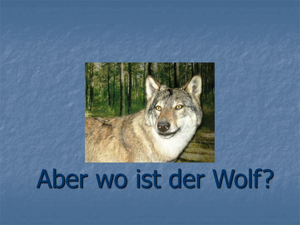 Aber wo ist der Wolf