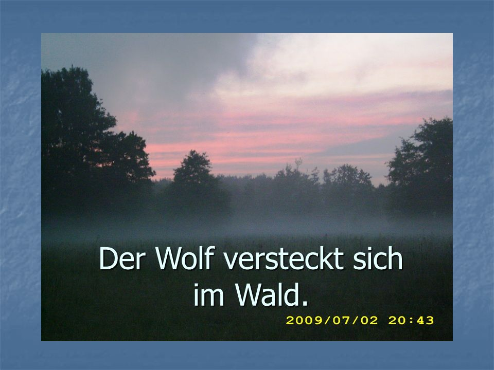 Der Wolf versteckt sich im Wald.