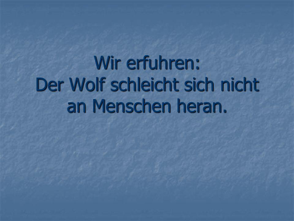 Wir erfuhren: Der Wolf schleicht sich nicht an Menschen heran.