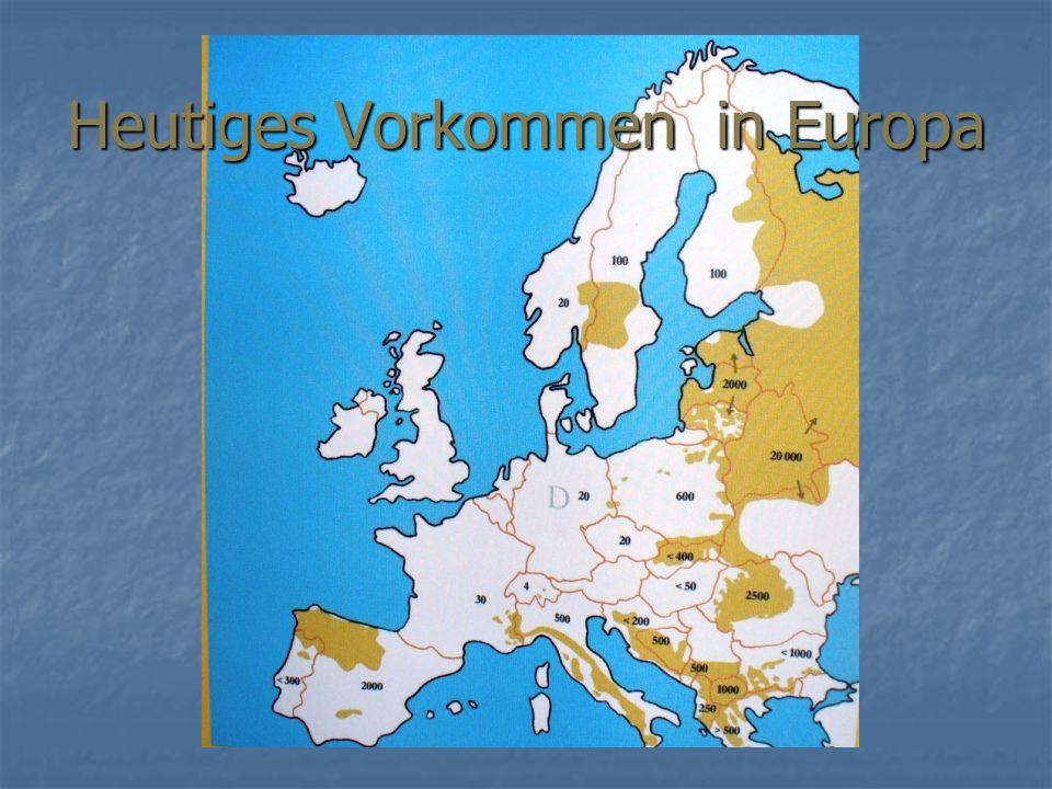 Heutiges Vorkommen in Europa