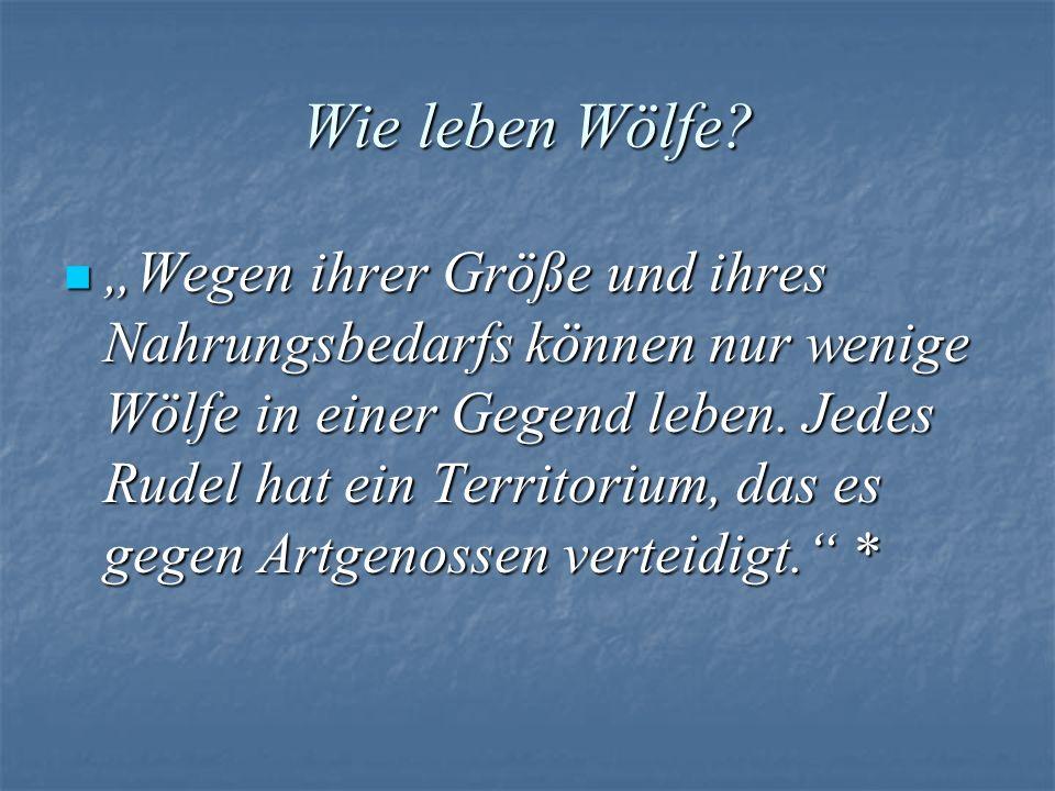 Wie leben Wölfe