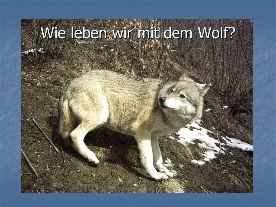 Wie leben wir mit dem Wolf