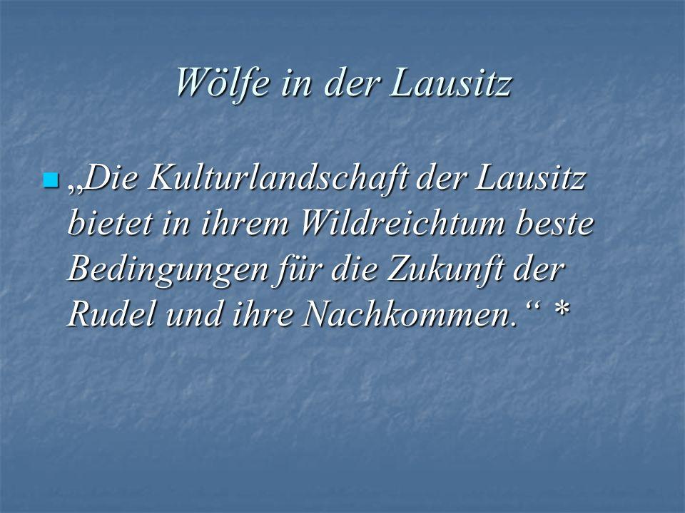 Wölfe in der Lausitz