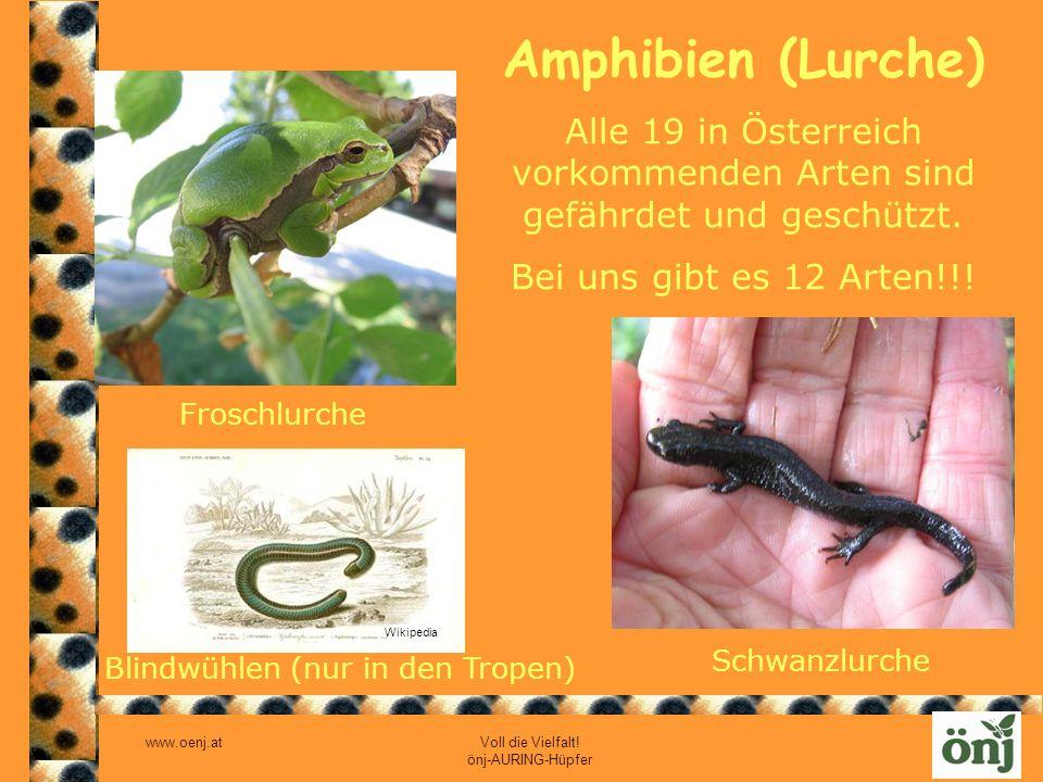 Alle 19 in Österreich vorkommenden Arten sind gefährdet und geschützt.