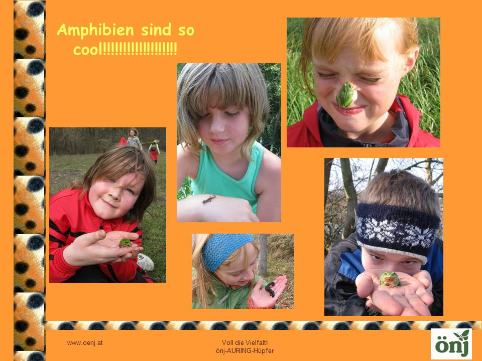 Amphibien sind so cool!!!!!!!!!!!!!!!!!!!