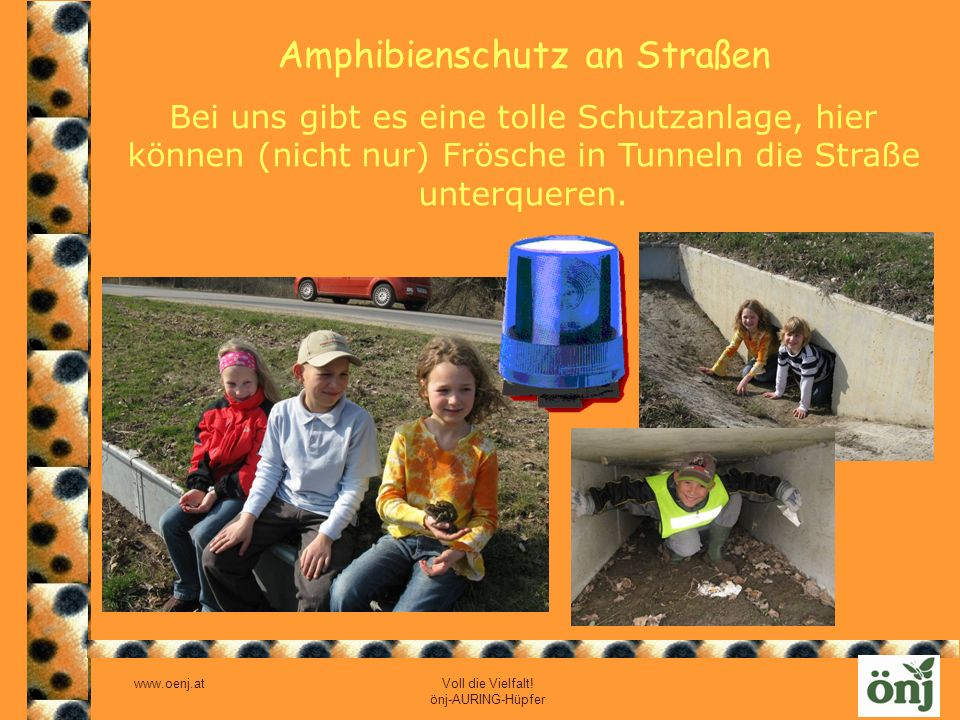 Amphibienschutz an Straßen
