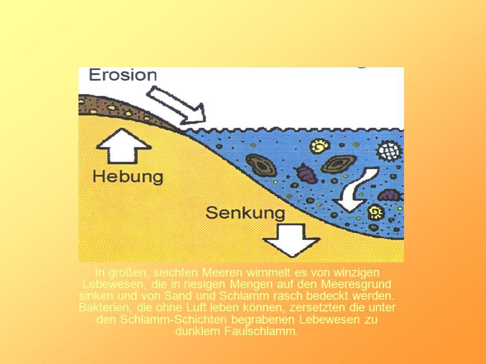 In großen, seichten Meeren wimmelt es von winzigen Lebewesen, die in riesigen Mengen auf den Meeresgrund sinken und von Sand und Schlamm rasch bedeckt werden.