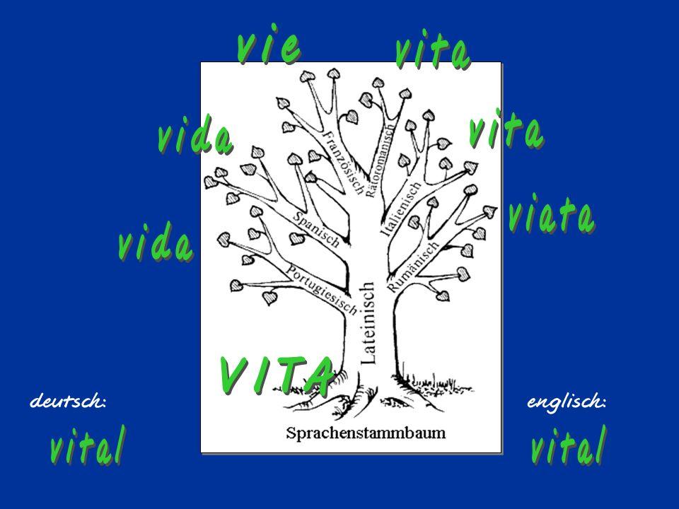 vie vita vita vida viata vida VITA vital vital