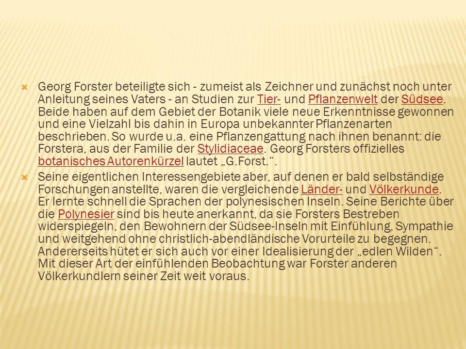 """Georg Forster beteiligte sich - zumeist als Zeichner und zunächst noch unter Anleitung seines Vaters - an Studien zur Tier- und Pflanzenwelt der Südsee. Beide haben auf dem Gebiet der Botanik viele neue Erkenntnisse gewonnen und eine Vielzahl bis dahin in Europa unbekannter Pflanzenarten beschrieben. So wurde u.a. eine Pflanzengattung nach ihnen benannt: die Forstera, aus der Familie der Stylidiaceae. Georg Forsters offizielles botanisches Autorenkürzel lautet """"G.Forst. ."""