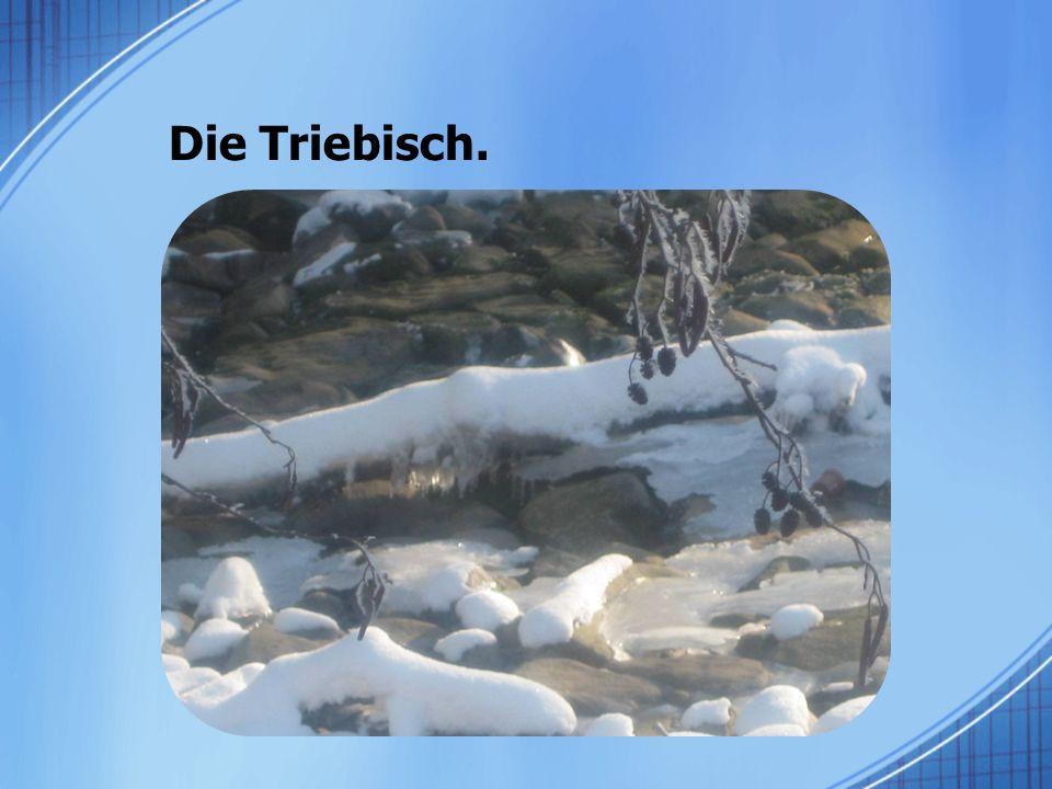Die Triebisch.
